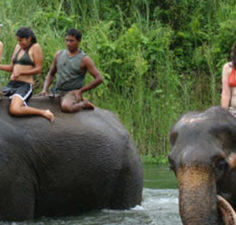 Nepal wildlife tours